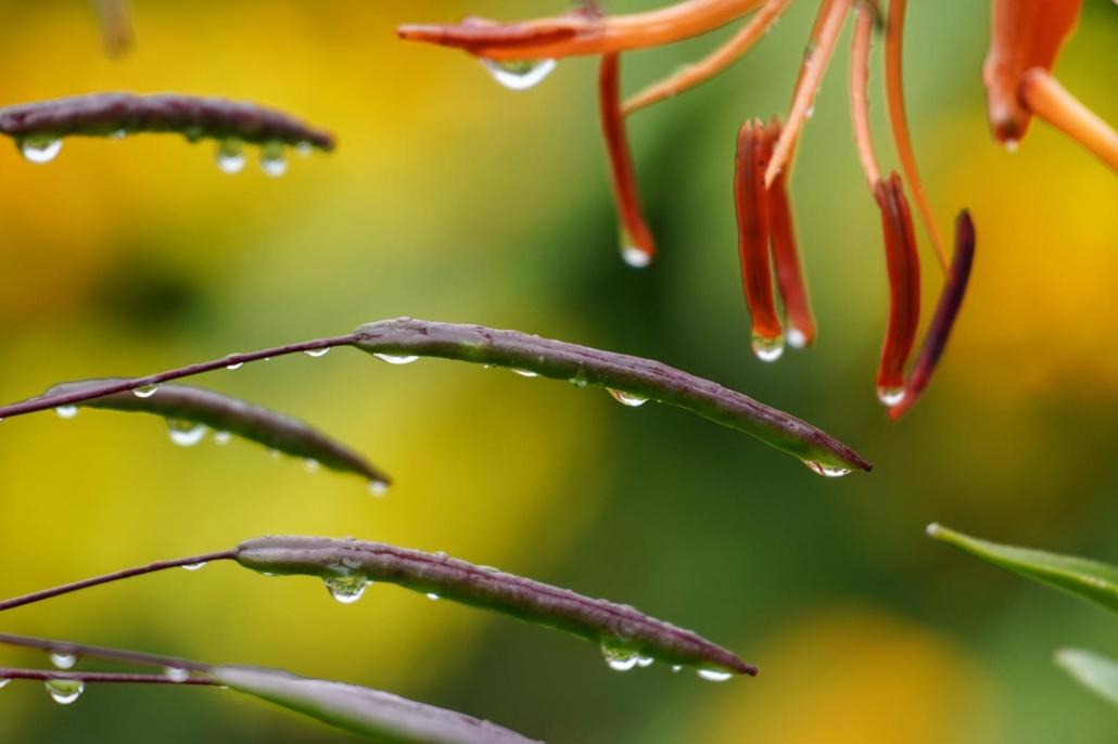 Blumen - Wassertropfen