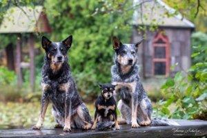 Hunde fotografieren - Workshop